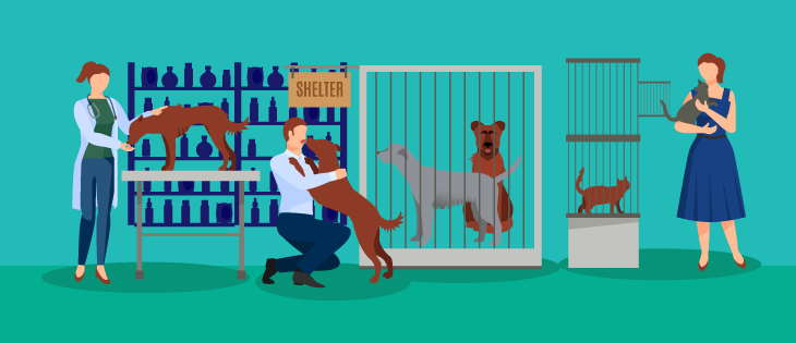 An animal shelter's communications plan is a great example of the benefits of machine learning for nonprofits.